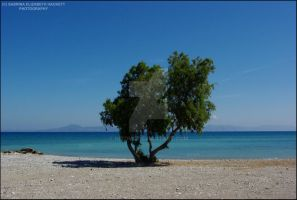 Tree on the Beach by Hitomii