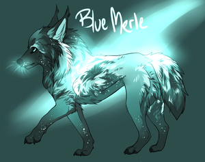 Blue Merle Lumen Auction by TheMauston