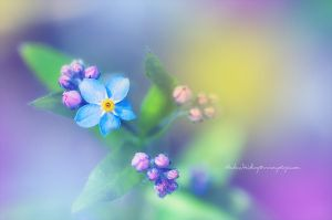Forget Me Not by Stridsberg