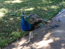 Folsom City Zoo Photo Series 0 by lilly-peacecraft