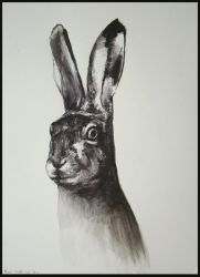 Hare - 25112011 by AEnigm4