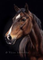 Horse drawing by VitasArtworks