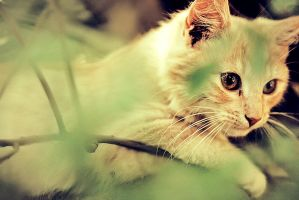 kittens part II. by hystericalemotion