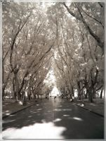 Hyde Park Trees - IR by JohnK222