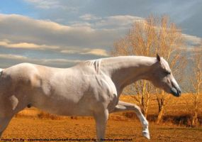 Palomino horse 1 by Sarahlou185