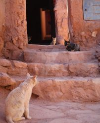 Morocco - Cats by JKE619