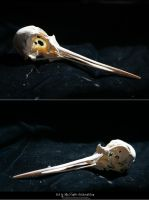 Bird Skulls Stock 10 by emothic-stock
