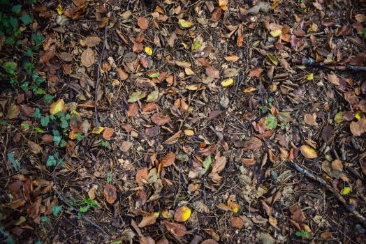 Leaves on the ground by matcheslv