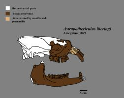 Astrapothericulus by Zimices