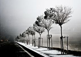 my tree 01 by metindemiralay