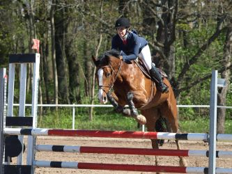 Bay, show jumping by wakedeadman