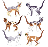 Breedable Cats - Litter 1 - LilacPaw x RabbitStar by owlette-adopts