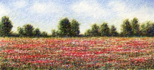 thousand red poppies by redbit