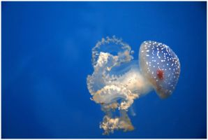 Jellyfish by sisyphi