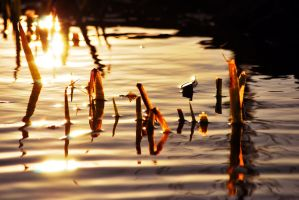 Ripples by SublimeBudd