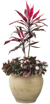 plant png 2 by DIGITALWIDERESOURCE