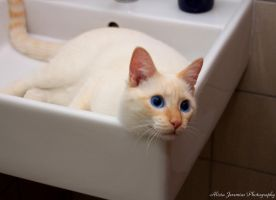 Playing in the sink by AngelAr-Feiniel