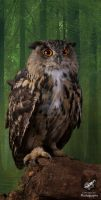 Taz the European Eagle Owl by Takarti