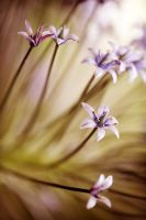 FlowerS by julie-rc