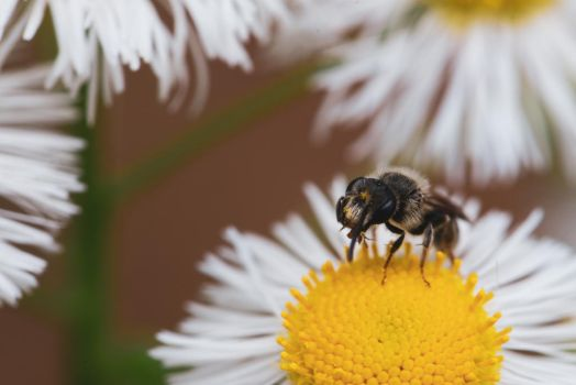Pollinating by Leap