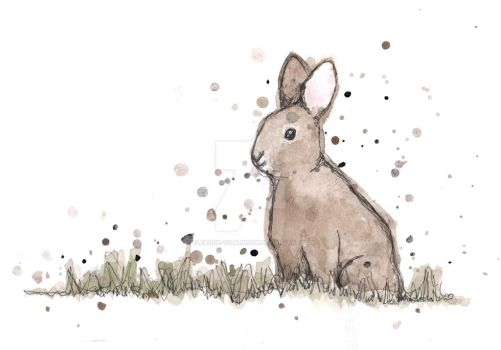 Bunny by eleanor-tomlinson