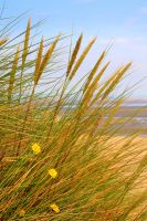Grass at the beach. by nectar666