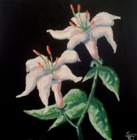 Pair of Lilies by Dunn95