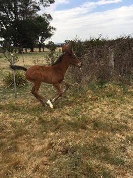 Foal Stock Cantering by Lucid-Dimensions