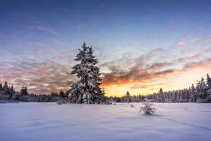 A Winters Morning by artmobe