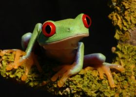 Frog on a log by AngiWallace