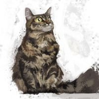 SPINNIN168: Maine Coon by Hamsta180