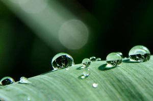 dew drop by Artwork-Production