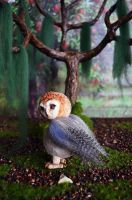 Barn Owl 002 by Irik77