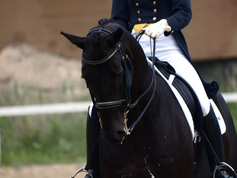 Dressage larger by wakedeadman