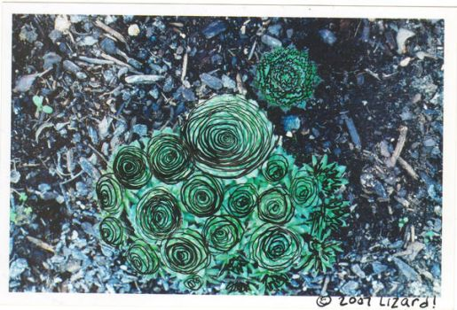 succulent of eternal life by NohOne