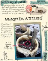 Germination Journal by ursulav
