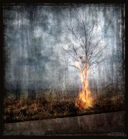 Burned with desire by LCristi by Ro-nature