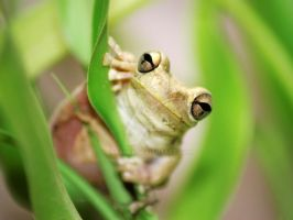 Cute Frog and Bamboo Leaves by Larah88