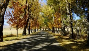 Tree Lined Lane by PamplemousseCeil