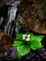 Along the Mountain Stream by wb-skinner