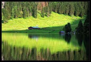 Green reflection by SenicaG