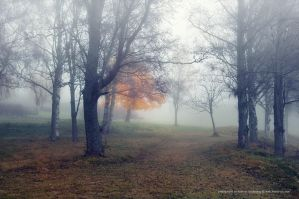 Misty Park by Stridsberg