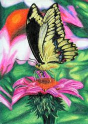 Swallowtail Butterfly by mrinx