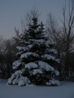 Winter Tree -STOCK by the-suns-moon