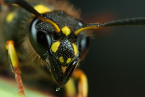 Wasp Mimic 2? by Alliec