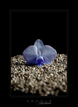 treasure-strain2k-orchid by onewordphoto