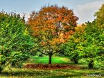 In The Middle Of Autumn by supersnappz16