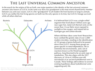 Science Fact Friday: LUCA by Alithographica