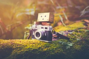 Danbo Takes up Photography by Profail