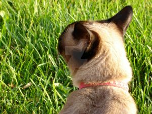 Tabitha and the Grass